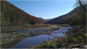 savage river forest state park